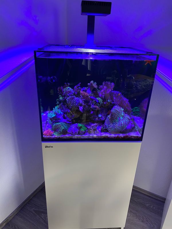 Red Sea Reefer 170 Komplettset